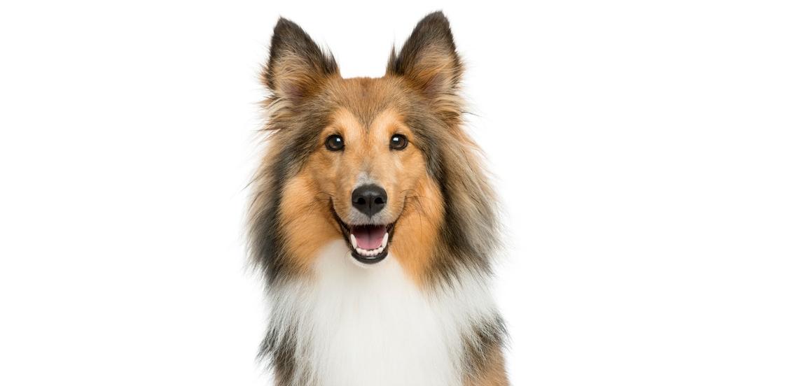 Trophy pet foods dog