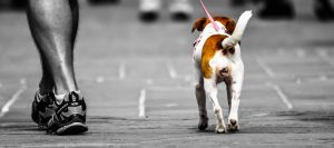 investing in pet related franchise business