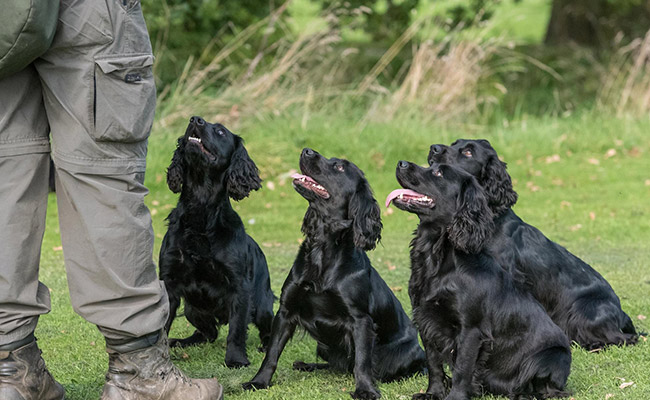 Brockwell Gundogs Franchise