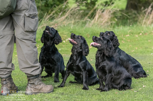Gundog Training Franchise