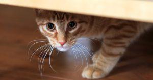 Cat Photo OSCAR pet foods