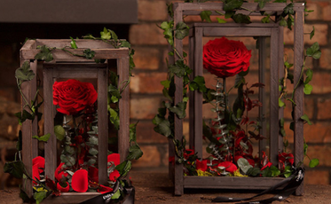 Endura Roses Boxed