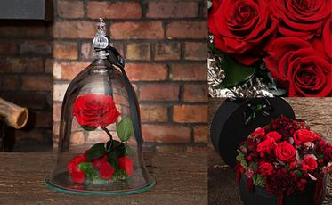 Endura Roses Image