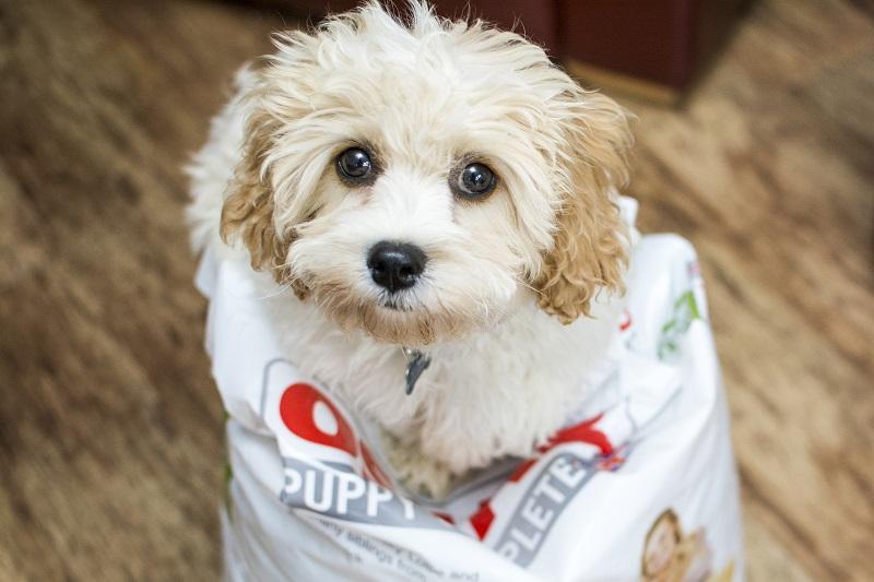 Cute Puppy Franchise UK