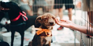 The Ultimate Guide to Starting Your Pet Care Franchise